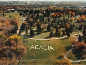 Acacia Park hillside